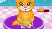 Pet Salon | Free online game | Mahee.com